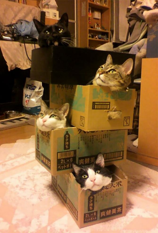 31 provas que gatos adora, ama lugares pequenos 31