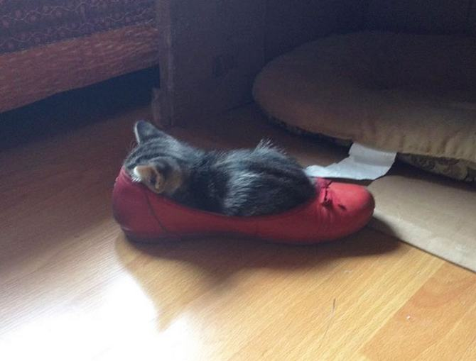 31 provas que gatos adora, ama lugares pequenos 32