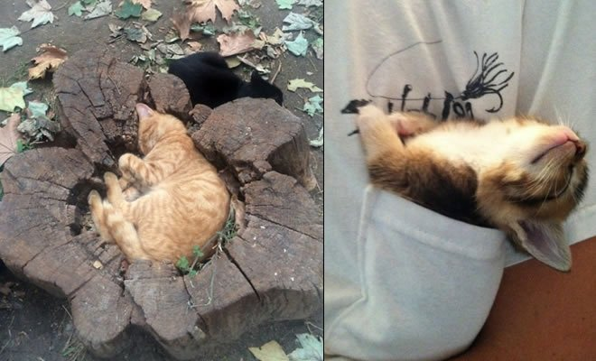 31 provas que gatos adora, ama lugares pequenos 4