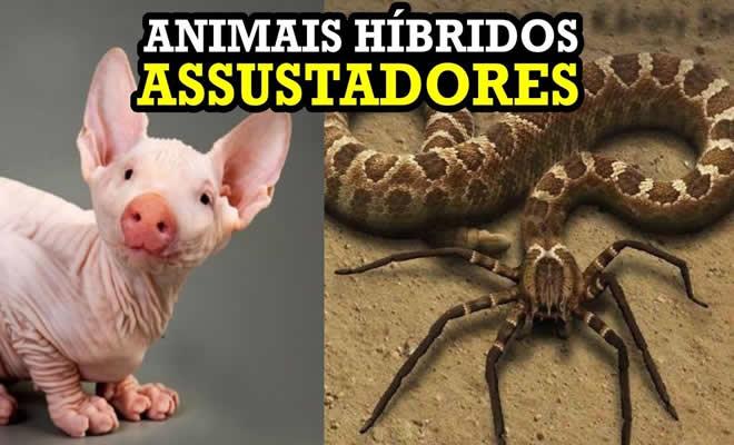 10 animais híbridos assustadores 3