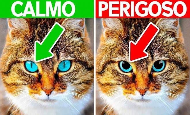 10 sinais que seu animal precisa de ajuda 6