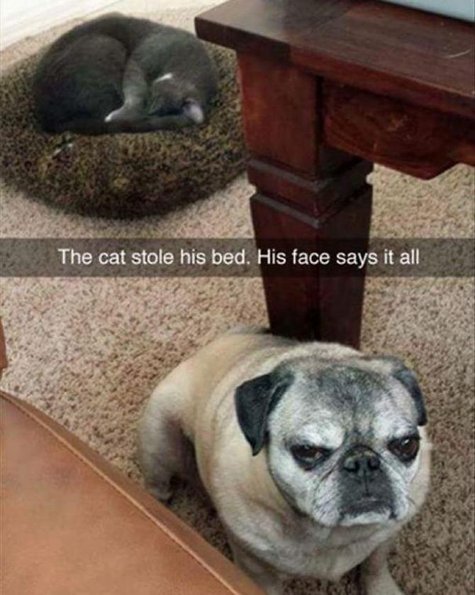 28 gatos e cachorros que tenta viver juntos, mas não funciona como gostaria 2
