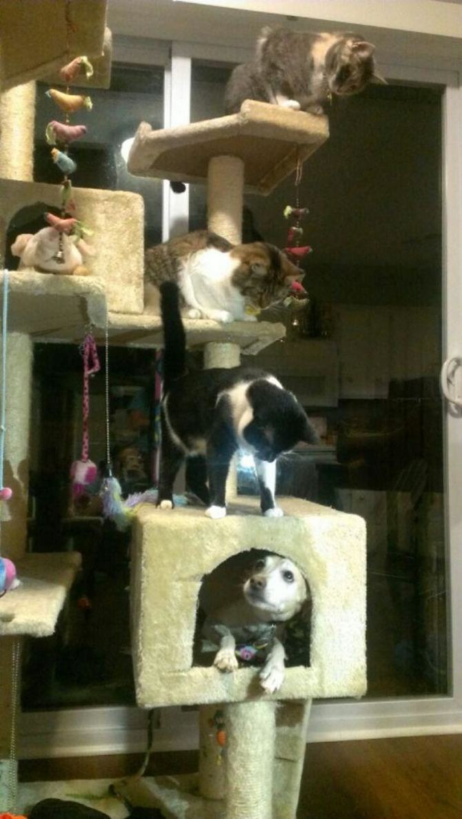 28 gatos e cachorros que tenta viver juntos, mas não funciona como gostaria 3