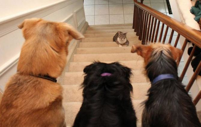28 gatos e cachorros que tenta viver juntos, mas não funciona como gostaria 4