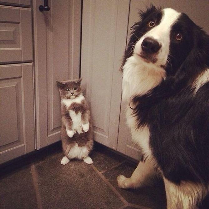 28 gatos e cachorros que tenta viver juntos, mas não funciona como gostaria 8
