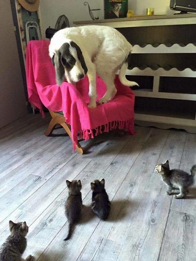 28 gatos e cachorros que tenta viver juntos, mas não funciona como gostaria 9