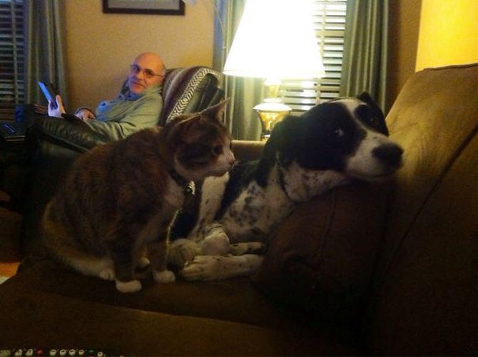 28 gatos e cachorros que tenta viver juntos, mas não funciona como gostaria 10