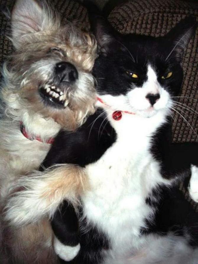 28 gatos e cachorros que tenta viver juntos, mas não funciona como gostaria 12