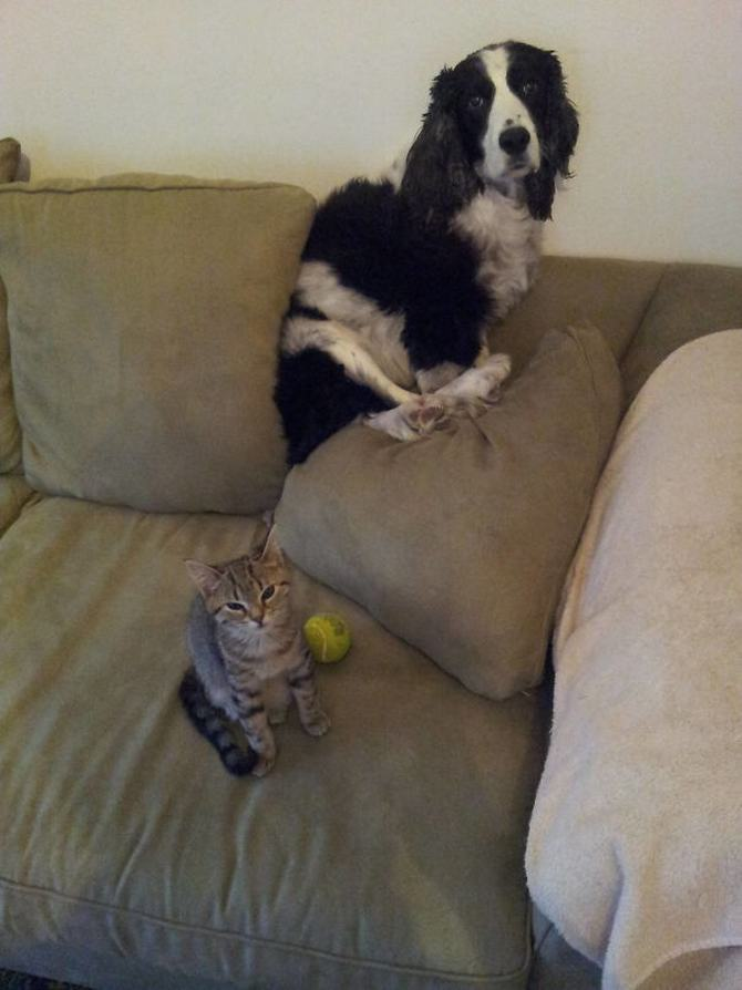 28 gatos e cachorros que tenta viver juntos, mas não funciona como gostaria 16