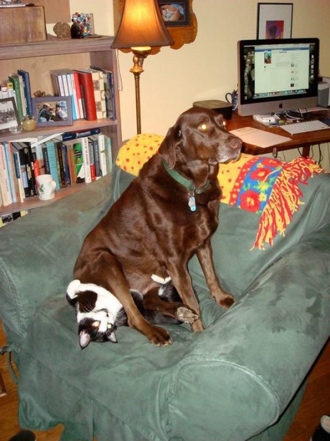 28 gatos e cachorros que tenta viver juntos, mas não funciona como gostaria 18