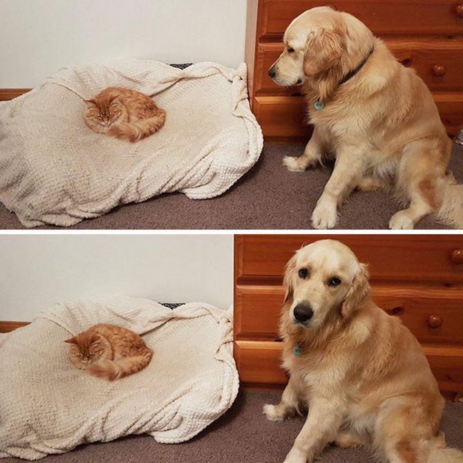 28 gatos e cachorros que tenta viver juntos, mas não funciona como gostaria 21