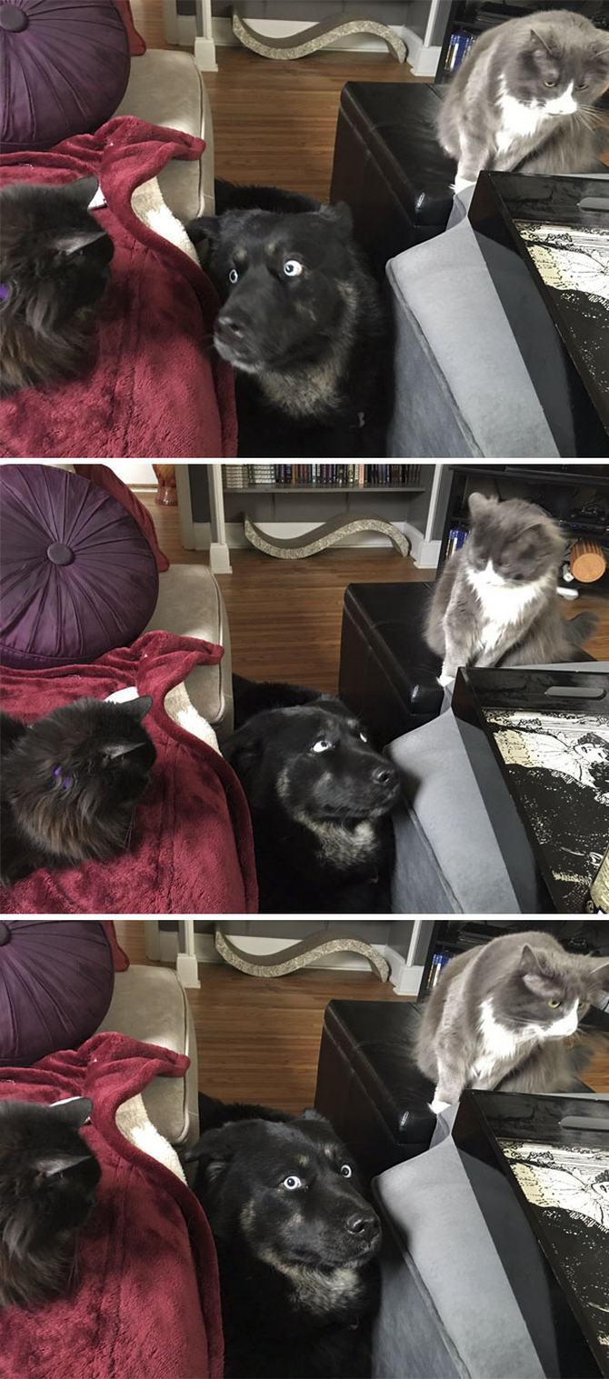 28 gatos e cachorros que tenta viver juntos, mas não funciona como gostaria 22