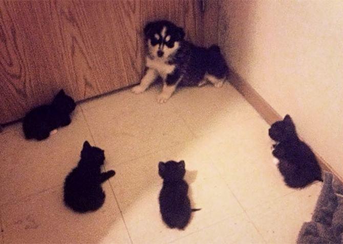 28 gatos e cachorros que tenta viver juntos, mas não funciona como gostaria 24