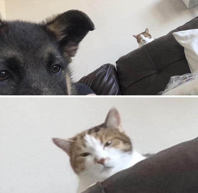 28 gatos e cachorros que tenta viver juntos, mas não funciona como gostaria 25
