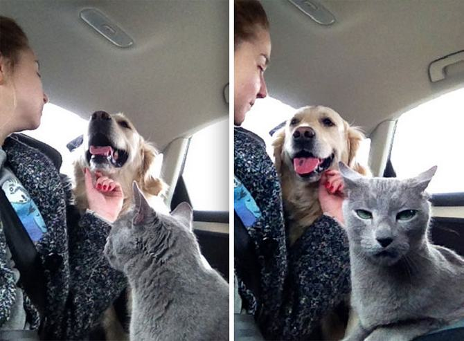 28 gatos e cachorros que tenta viver juntos, mas não funciona como gostaria 26