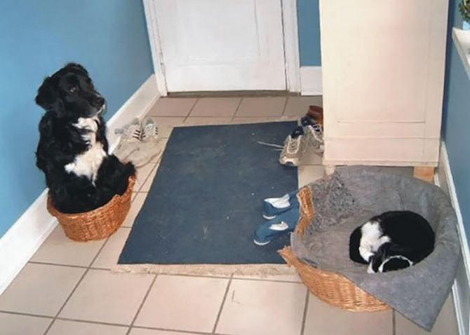 28 gatos e cachorros que tenta viver juntos, mas não funciona como gostaria 28