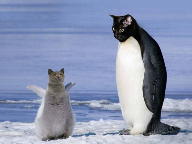 Gatos e pássaros são uma combinação perfeita! (16 fotos) 4