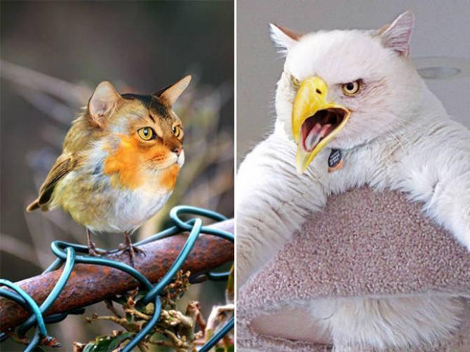 Gatos e pássaros são uma combinação perfeita! (16 fotos) 8
