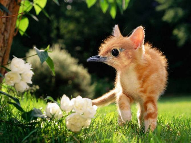 Gatos e pássaros são uma combinação perfeita! (16 fotos) 12