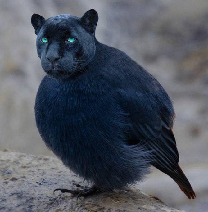 Gatos e pássaros são uma combinação perfeita! (16 fotos) 15