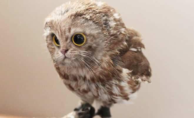 Gatos e pássaros são uma combinação perfeita! (16 fotos) 9
