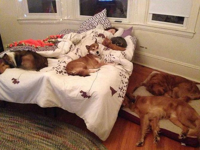 36 pessoas que vivem com mais de 3 animais de estimação revelam que é muito divertido 3