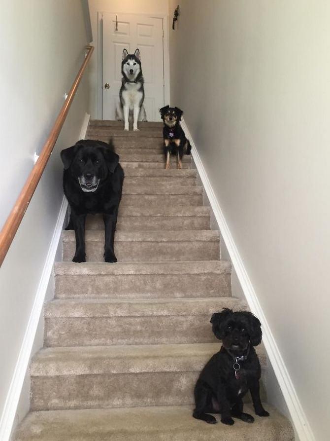 36 pessoas que vivem com mais de 3 animais de estimação revelam que é muito divertido 8