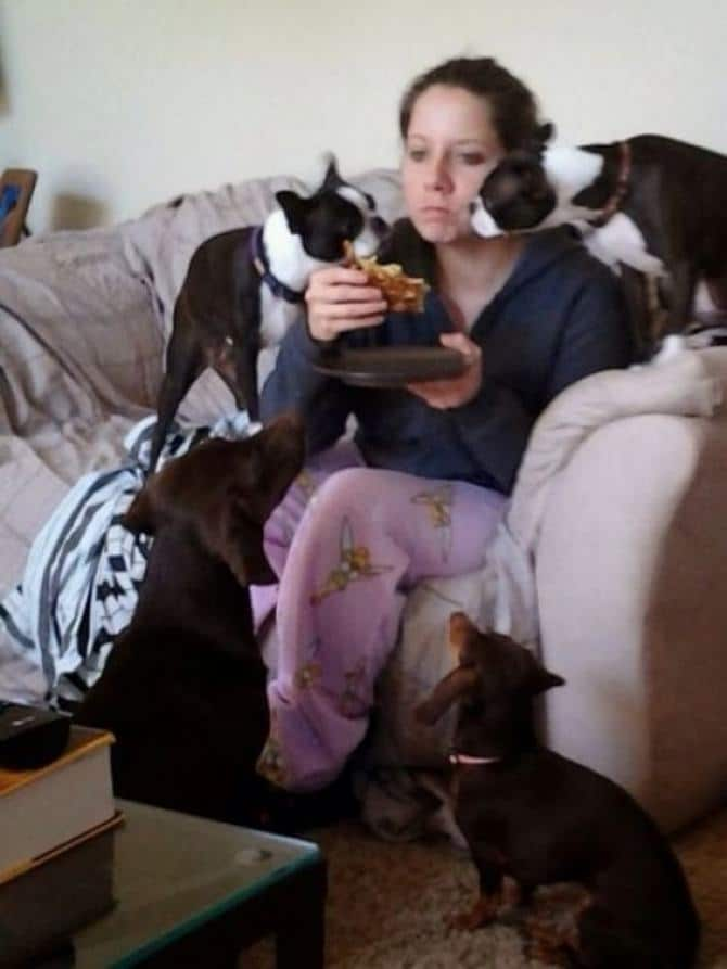 36 pessoas que vivem com mais de 3 animais de estimação revelam que é muito divertido 9