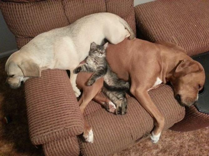 36 pessoas que vivem com mais de 3 animais de estimação revelam que é muito divertido 12