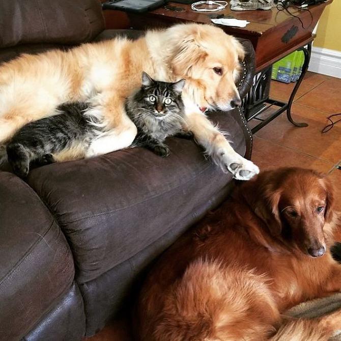36 pessoas que vivem com mais de 3 animais de estimação revelam que é muito divertido 13