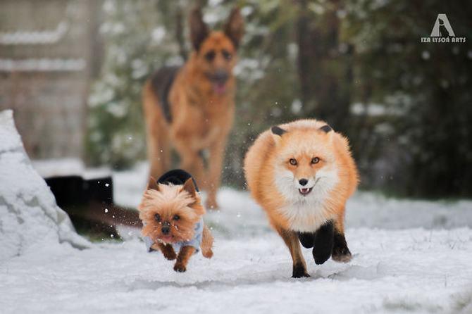 36 pessoas que vivem com mais de 3 animais de estimação revelam que é muito divertido 19