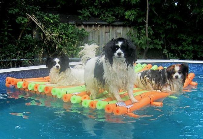36 pessoas que vivem com mais de 3 animais de estimação revelam que é muito divertido 20