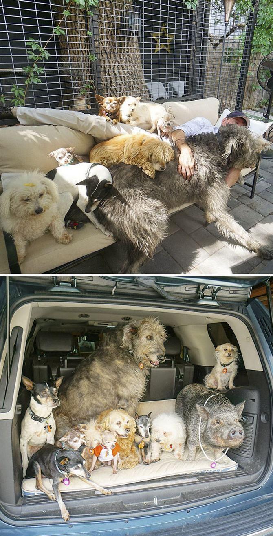36 pessoas que vivem com mais de 3 animais de estimação revelam que é muito divertido 31