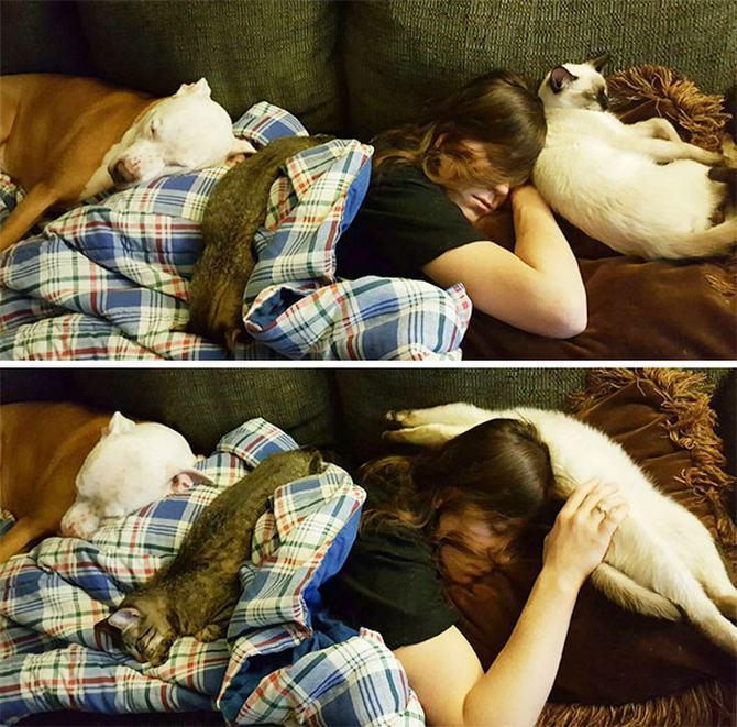 36 pessoas que vivem com mais de 3 animais de estimação revelam que é muito divertido 35