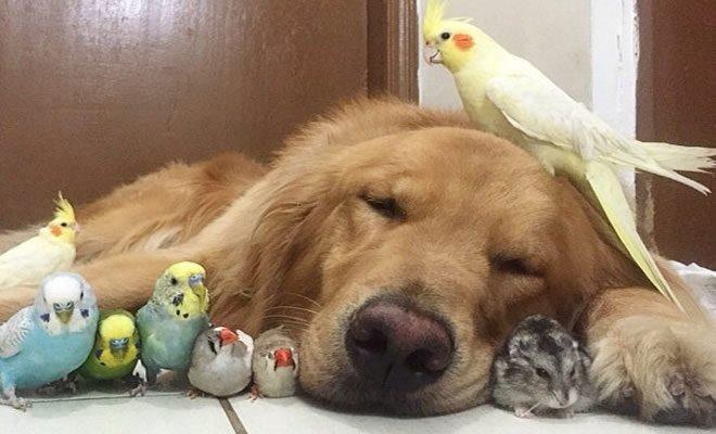 36 pessoas que vivem com mais de 3 animais de estimação revelam que é muito divertido 28