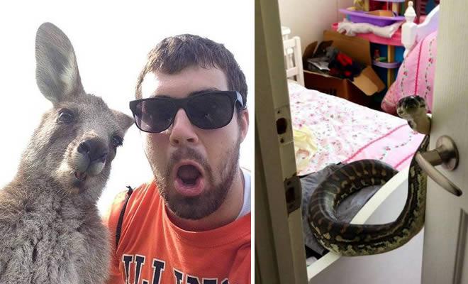 Austrália: Sim Ou Não? Decisão difícil! (32 fotos) 4