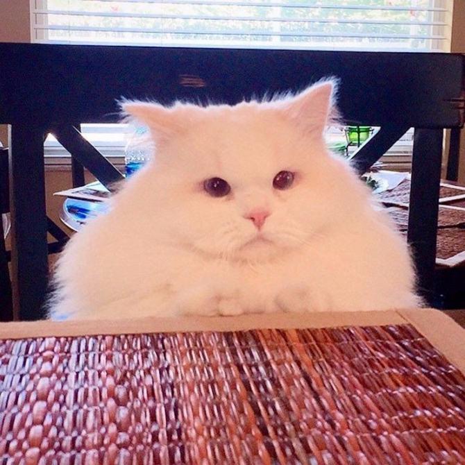 21 fotos divertidas que mostram o que são os gatos 3