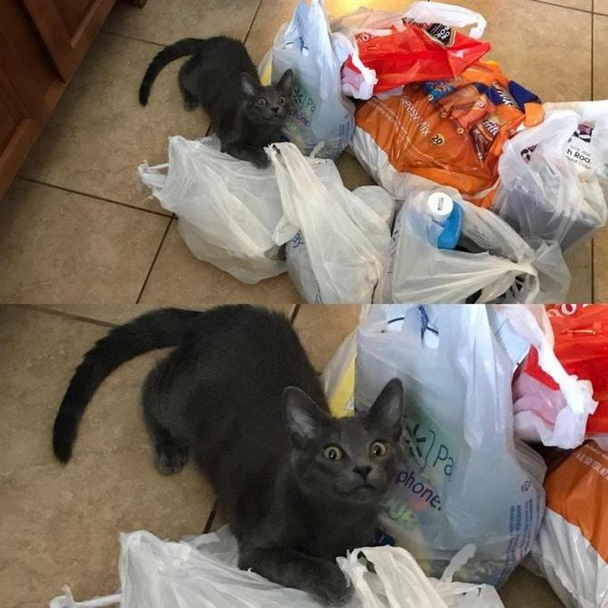 21 fotos divertidas que mostram o que são os gatos 5