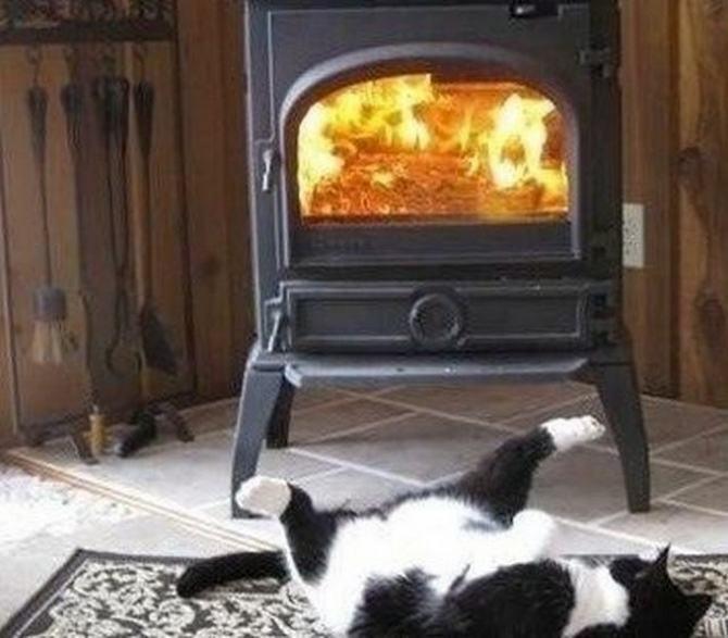 21 fotos divertidas que mostram o que são os gatos 6