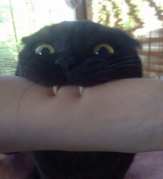 21 fotos divertidas que mostram o que são os gatos 7