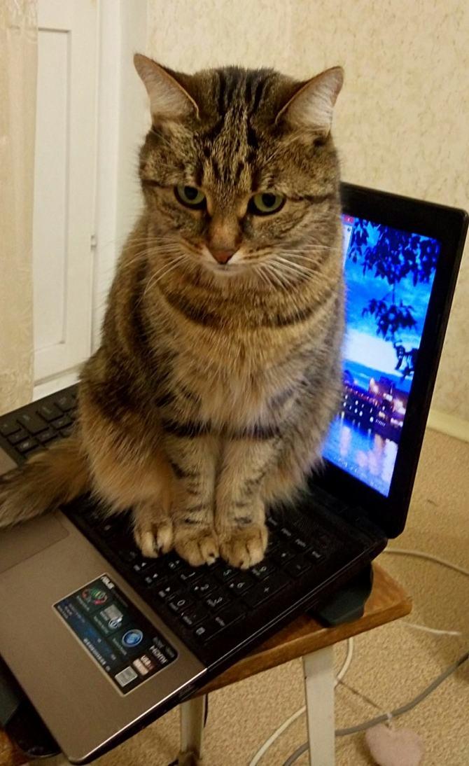 21 fotos divertidas que mostram o que são os gatos 11