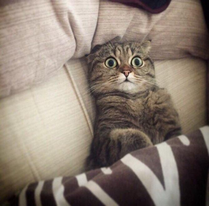 21 fotos divertidas que mostram o que são os gatos 13