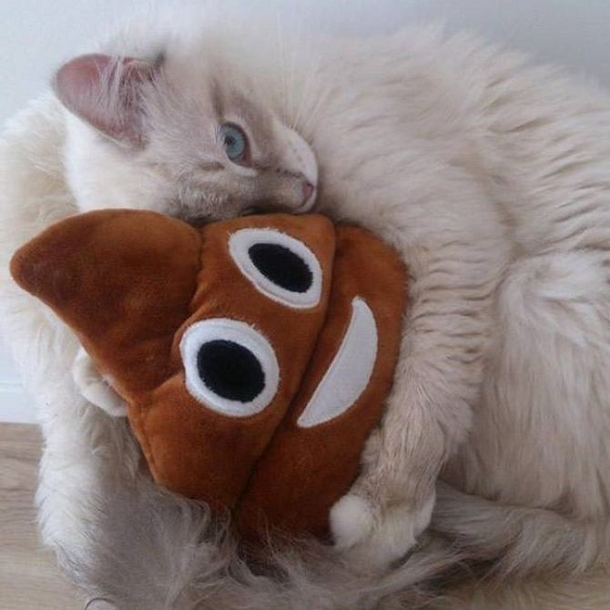 21 fotos divertidas que mostram o que são os gatos 14