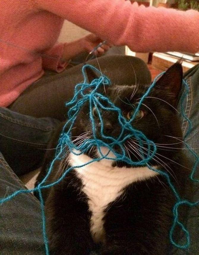 21 fotos divertidas que mostram o que são os gatos 15