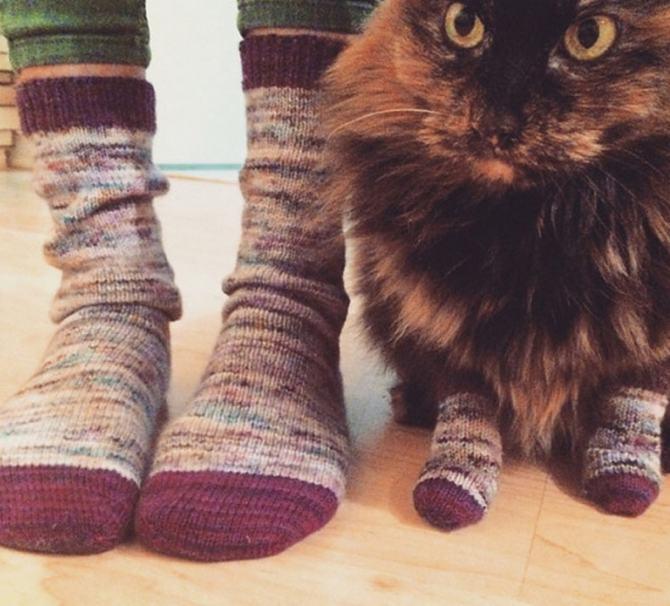 21 fotos divertidas que mostram o que são os gatos 16