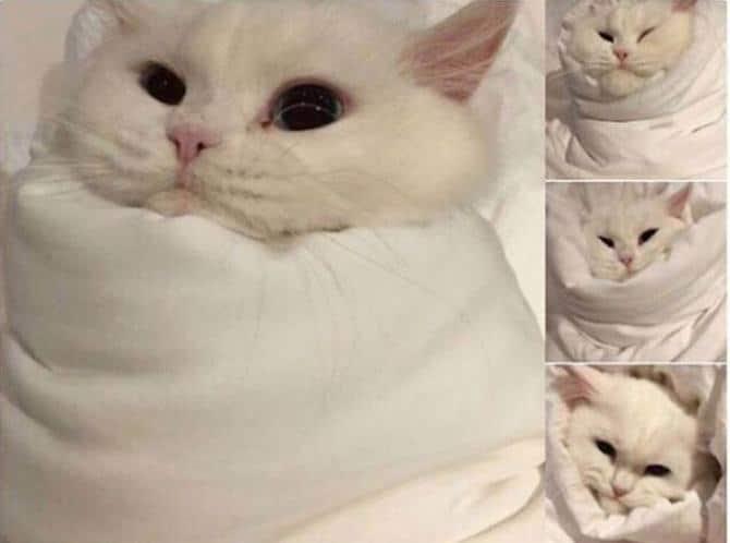 21 fotos divertidas que mostram o que são os gatos 17