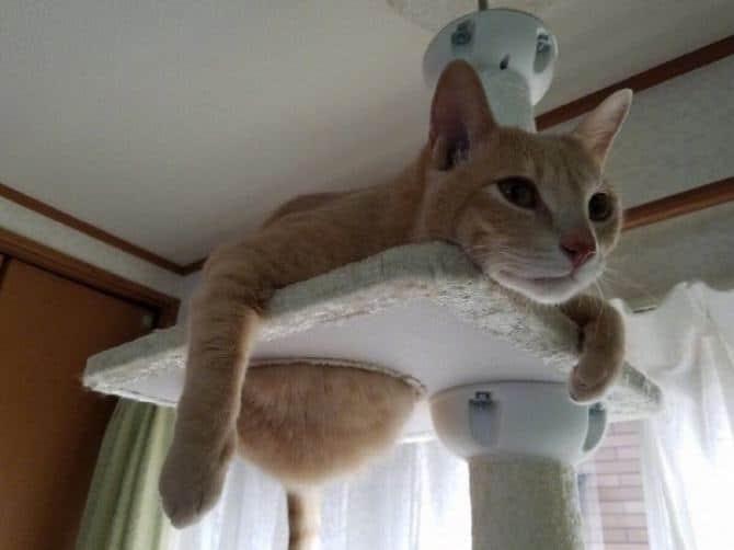 21 fotos divertidas que mostram o que são os gatos 19