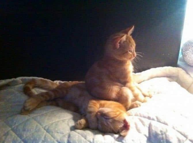 21 fotos divertidas que mostram o que são os gatos 21