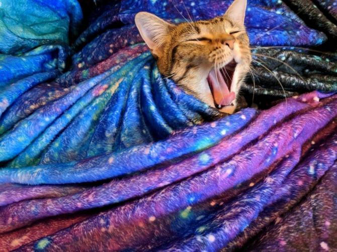 21 fotos divertidas que mostram o que são os gatos 22
