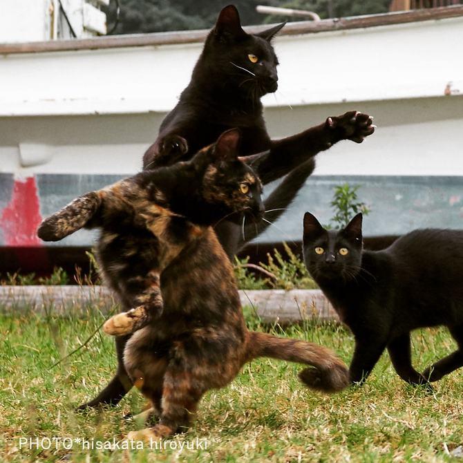 25 gatos que sabe a arte ninja 3